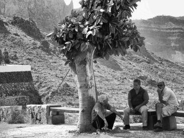 The shade tree