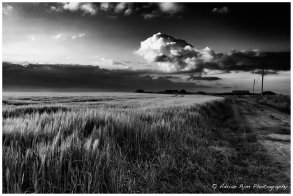 Night wheat 3