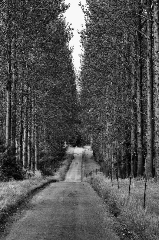 Tree lined drive